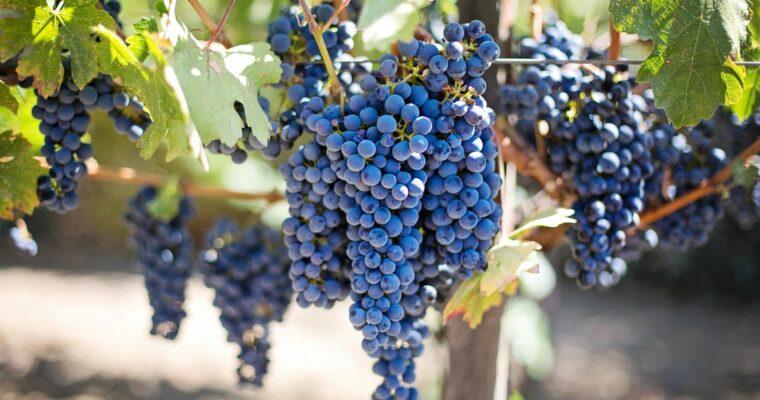 The Wines of California's Santa Maria Valley