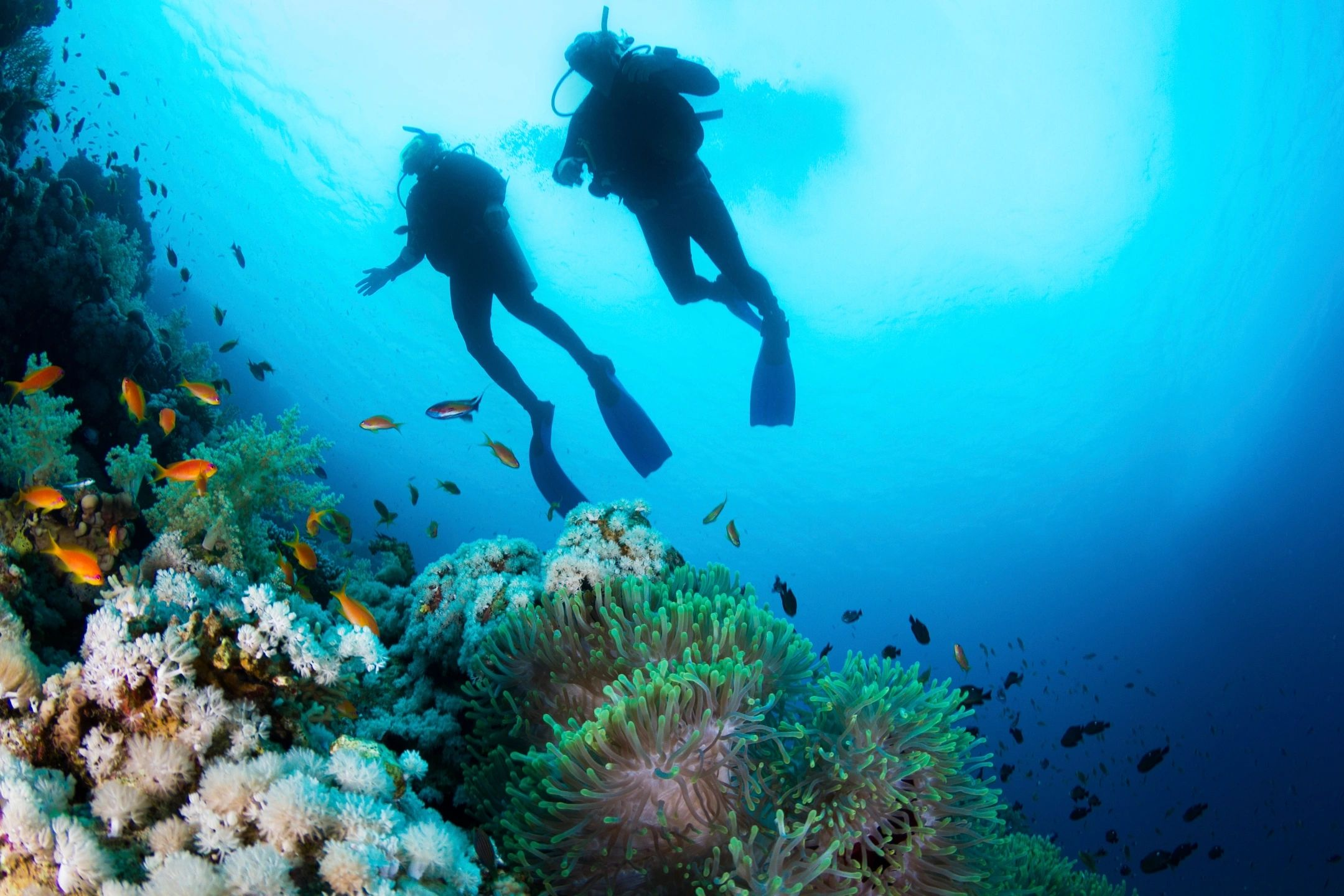 Australia's amazing underwater museum: the Great Barrier Reef